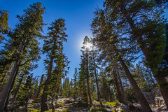 BareIslandLakeTrees2Sept1-18 (divindk) Tags: bareislandlake california maderacounty sierranationalforest backpacking camping hiking lake quiet reflection serene sunrays sunshine treetop trees