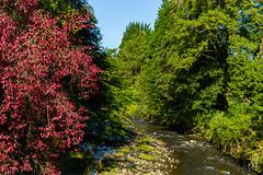 Autumn colours ! Sept. 2018 (I.T.P.) Tags: autumn colours trees water park lancashire
