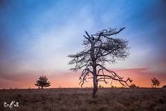 Sunrise at NP Veluwezoom (The Netherlands) (Renate van den Boom) Tags: 09september 2018 boom europa gelderland heide jaar landschap maand natuur nederland renatevandenboom veluwezoom weer zon zonsopkomst