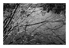 Branches... (DavidB1977) Tags: fujifilm x100f monochrome bw nb france hautsdefrance picardie oise commelles orrylaville étangs branches