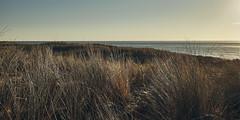(thierrylothon) Tags: dune océan aquitaine gironde presquilecapferret capferretocéan piraillan nature paysage 03aplage collection phaseone captureonepro c1pro fluxapple flickr fujifilm fujixpro2 fujinonxf23f2rwr lègecapferret france fr