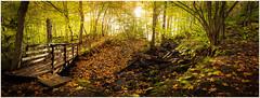 Sahajärvi, Teijo (mvnfotos) Tags: 52weeks2018 5fall 52in2018challenge sahajärvi teijo autumn smileonsaturday seasonsflora