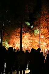 2018 - 4.10.18 Enchanted Forest (137) (marie137) Tags: forest lights trees show marie137 bright colourful pitlochry treeman attraction visit entertainment music outdoors sculptures wicker food drink family people water animation