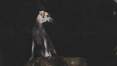 Nue (rischefantorus) Tags: dog dogs nue light shadow