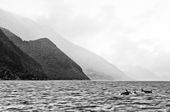 Wildlife near Ithaca (zdenisaba) Tags: ithaca island water sea holiday clouds monochrome land landscape wildlife trees mountain mountainside dolphins misty sky horizont surface