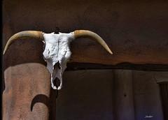LongHorn (msuner48) Tags: d750 acr5 cs4 skull longhorn bovine steer horns ranch ghostranch georgiaokeeffeartrustictopaz labsnik collectionnikon afs 24120mm f4g ed