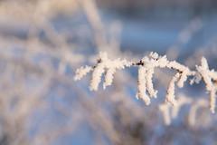 Soon (akk_rus) Tags: 2470 28 nikkor nikkor247028 nikon d800 nikond800 russia россия europe европа русия rusia russie smolensk смоленск winter snow зима снег season