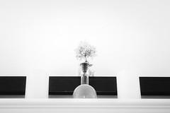 Hydrangea in Vase (marylea) Tags: 2018 vase sep26 hydrangea minimalism blackwhite bw