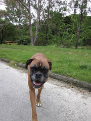 IMG_2426 (dastridc) Tags: loveparkrun porirua parkrun park sport running bothamley newzealand