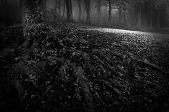 roots (NV3PARYCESK4AU3UGN3X532HOL) Tags: blackwhitepassionaward