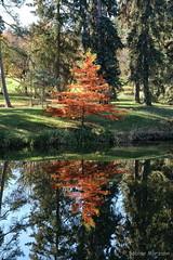 Herbst im botanischen Garten (Sockenhummel) Tags: fuji xt10 baum spiegelung reflection herbst garten garden park autumn falll bunt indiansummer see botanischergarten berlin