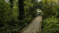 Passage (musette thierry) Tags: wavrin france dûele passage lieu promanade vert automne musette thierry d800 nikon nikkor photographie picture falowme new
