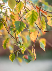 Autumns Leaves (A Journey With A New Camera) Tags: leaves autumn fall dorset knollbeach studland