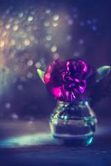 Carnation (Ro Cafe) Tags: pentacon50mmf18 sonya7iii stilllife carnation flowers littlevase purple setup dark lowkey light bokeh