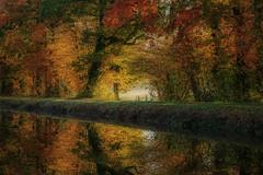 Le long du canal d'Ille-et-Rance (Les 3 couleurs) Tags: canaldilleetrance chevaigné illeetvilaine bretagne brittany hautebretagne arbres trees reflets reflection automne autumn