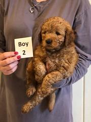 Darby Boy 2 pic 4 12-9