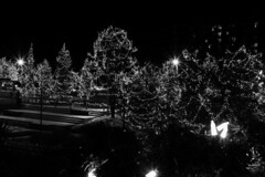 Season of Light (HW111) Tags: christmas bw blackandwhite garland holiday lights longexposure monochrome stairs starburst steps town trees night explore20181209
