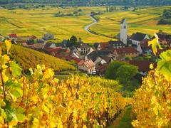 Katzenthal (Haut-Rhin, F) (pietro68bleu) Tags: alsace vignoble feuilles automne église villagealsacien
