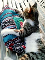 Sorry, my bag... 🐾 (nurdan*) Tags: animal cat kedi hayvanlar photo photograph original bag sweet cute