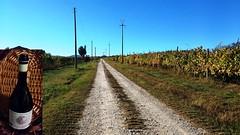Il Buon vino dei Piani Castellani (bobobo40) Tags: vino vigna gutturnio piani castellani