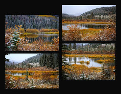 Transitions (louelke - on and off) Tags: jaspernationalpark alberta canada autumn colors snow fall water colorful transitions seasons pond