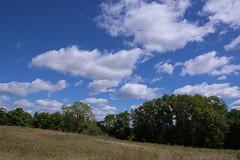Maybury-State-Park_Northville-MI_09-15-2011x (Count_Strad) Tags: mayburystatepark maybury state park northville michigan mi fallcolor field