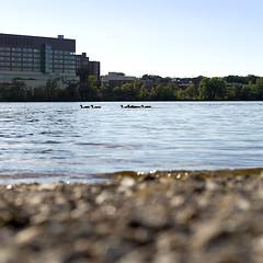 DMAFR Day 6 (9) (momentspause) Tags: mississippiriver ricohgr river canon5dmkiii canonef50mmf18 roadtrip riverbank minnesota ducks