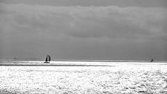 Quand la mer scintille...  -  When the sea sparkles ... (Philippe Haumesser (+ 6000 000 view)) Tags: sea sky water ocean boat voilier tregunc bretagne sudfinistère france nikond7000 nikon d7000 reflex 2018 nuages clouds panorama noiretblanc blackandwhite monochrome 169 paysage paysages landscape landscapes