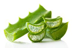 Aloe leaves, isolated on white (aprianadina16) Tags: aloe alternative background botanical botany care close closeup component cosmetic flora foliage fresh green healing health healthy herb herbal homeopathic ingredient isolated juicy leaf medicinal medicine natural nature nobody organic part plant sap slice sliced spiked succulent thorn treatment up vera white
