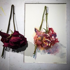 Day 1167. The #process of  #rose #painting for today. #watercolour #watercolourakolamble #sketching #stilllife #flower #art #fabrianoartistico #hotpress #paper #dailyproject #mfa #mfa201840 #mfa201840rosepainting (akolamble) Tags: mfa201840rosepainting process rose painting watercolour watercolourakolamble sketching stilllife flower art fabrianoartistico hotpress paper dailyproject mfa mfa201840