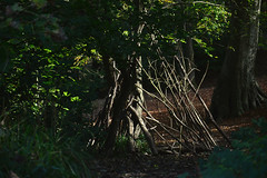 den clearing (Keat-ulie) Tags: twigs trees structure dense forest clearing dens manmade built craft grass leaves green brown britain britishnature woods parks nature naturephotography branches