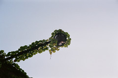 000022710036 (spablab) Tags: canoncanonetql17giii200fujifilmsuperiamemphisfilml canoncanonetql17giii200fujifilmsuperiamemphisfilmlablenstagger canoncanonetgiiiql17 canon canonet giii ql17 film ishootfilm 40mm rangefinder