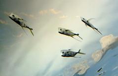 atmospheric (subarcticmike) Tags: subarcticmike travel tourism ecotourism fish display ripleys aquarium toronto ontario canada aesthetic dreamscape geotagged flatiron cans2s nonaerodynamic funny