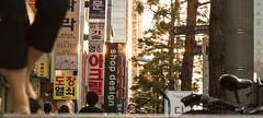 Seoul, South Korea 2018 (MonkeyTakingPics) Tags: red city downtown seoul street southkorea korea streetphotography people sun summertime asia roadtrip travel