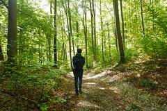 Bad Urach (mireiatarres) Tags: madera wood bosque arboles trees tree wald autum herbst green leaves