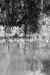 Krka #1 (majamacanovic) Tags: river light shadow lightshadow blackandwhite bw monochromatic minimalism krka
