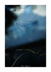 2018/9/8 - 17/21 photo by shin ikegami. - SONY ILCE‑7M2 / Lomography New Jupiter 3+ 1.5/50 L39/M (shin ikegami) Tags: silhouette シルエット 紅葉 マクロ macro sky 空 井の頭公園 吉祥寺 summer 夏 sony ilce7m2 sonyilce7m2 a7ii 50mm lomography lomoartlens newjupiter3 tokyo sonycamera photo photographer 単焦点 iso800 ndfilter light shadow 自然 nature 玉ボケ bokeh depthoffield naturephotography art photography japan earth asia