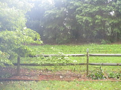 Rain and windy in Huntersville NC  28 mph gusts 46. (snow41) Tags: hurricanemichael trees okra rain fence 3oclockpm oct112018 tropicalstorm huntersvillenc geotagnorthcarolina