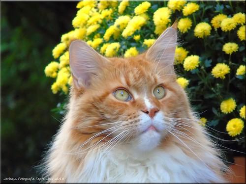 aufmerksamer Beobachter - attentive observer