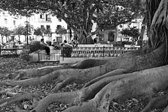 Plaza del Museo # 2 (just.Luc) Tags: tree boom arbre baum árbol albero square place plein piazza plaza spain spanje espagne españa spanien andalusië andalucía andalusien andalousie andalusia sevilla seville séville siviglia bn nb zw monochroom monotone monochrome bw europa europe