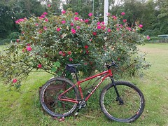 2018 Bike 180: Day 164 - Roses are red, And so is my Niner (mcfeelion) Tags: cycling bike bicycle niner annandaleva bike180 2018bike180