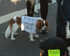 Four Legged Protest (Puckpics) Tags: kingcharlesspaniel spaniel dog brexit protest peoplesvotemarch