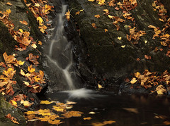 """Just a whisper.... (Vab2009) Tags: stream forest autumn colour tollymore tollymoreforestpark leaves leaf """"mournemountains"""" whisper trickle"""