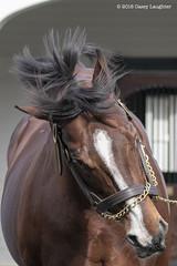 Palace (Casey Lynn Photos) Tags: 2018copyright spendthrift farm sports sportsphotography stallion stallions lexington kentucky ironworkspike palace cityzip