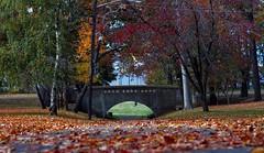 _DSF2547 (Fariehna) Tags: autumn scenicphotography autumnphotography autumnseason