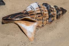 Arcachon - sculptures de sable (gael.lamirand) Tags: sculpture france plage nouvelleaquitaine matières activité coquillage sable paysages gironde europe arcachon mer fr