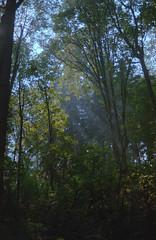 Misty Sunlight (jvde) Tags: 3570mmf3345nikkor burnaby coolscan film fujicolor400 gimp nikonfe