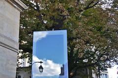 Tree & reflection (Jeanne Menjoulet) Tags: reflection reflet tree paris ruedebretagne