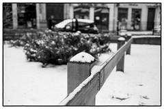 Une pétale en hiver (yoannpupat) Tags: banal grainisgood filmisnotdead ishootfilm konicaautos3 35mm fomapan400 snow france noiretblanc bw film