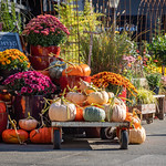 Ravenna Gardens Store, University Village Seattle Washington thumbnail